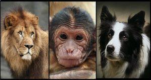il-cane-il-leone-la-scimmia